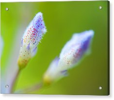 Acrylic Print featuring the photograph Twins Bloom by Afrison Ma