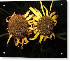 Twins Acrylic Print by Mike Podhorzer