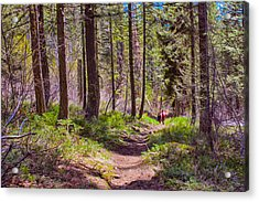 Twisp River Trail Acrylic Print by Omaste Witkowski