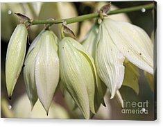 Twist-leaf Yucca Acrylic Print