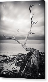 Twisted Acrylic Print by Adam Romanowicz