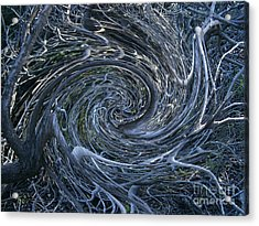 Twisted Briar Acrylic Print by Drew Shourd