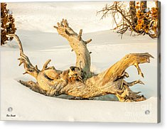 Twisted Dead Tree Acrylic Print