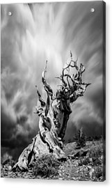 Twisted In Time Acrylic Print