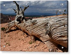 Acrylic Print featuring the photograph Twisted by Jon Emery