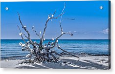 Twisted Acrylic Print by Phil Abrams
