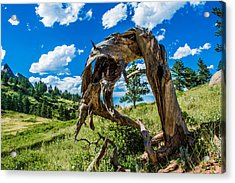 Acrylic Print featuring the photograph Twisted Pine by Rhys Arithson