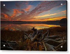 Twisted Roots Acrylic Print by William Sanger