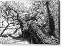 Twisted Tree - 03 Acrylic Print by Gregory Dyer