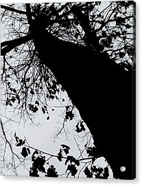 Acrylic Print featuring the photograph Twisted Tree by Candice Trimble