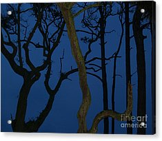 Twisted Trees At Twilight Acrylic Print by Anna Lisa Yoder