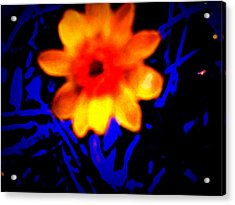 Acrylic Print featuring the photograph Twisted Wild Flower by Eric Switzer
