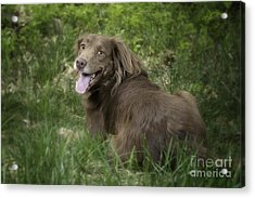 Twix Acrylic Print by Donna Cloutier