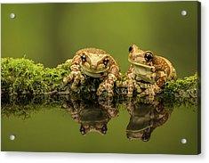 Two Amazon Milk Frogs Acrylic Print by Markbridger