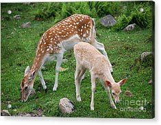 Two Babes Acrylic Print