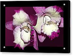 Two Baby Orchids Acrylic Print by Phyllis Denton