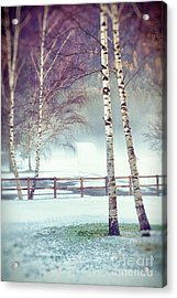 Two Birches Acrylic Print