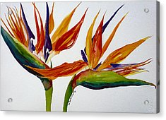 Two Birds Of Paradise Acrylic Print by Susan Duda