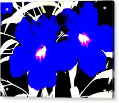 Two Blue Jack Flowers Acrylic Print