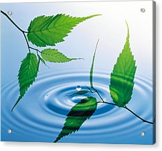Two Branches With Green Leaves Floating Acrylic Print
