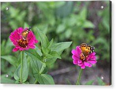 Two Busy Acrylic Print