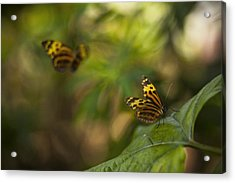 Two Butterflies Acrylic Print