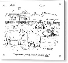 Two Cows On A Farm Talking Acrylic Print