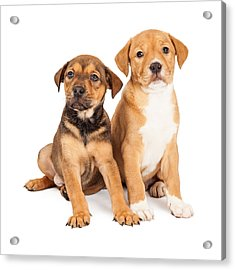 Two Cute Crossbreed Puppies Acrylic Print