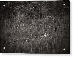 Acrylic Print featuring the photograph Two Deer Hiding by Bradley R Youngberg