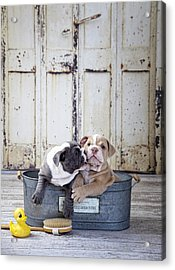 Two Dogs In Tub Acrylic Print