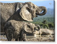 Two Ellies Drinking Acrylic Print
