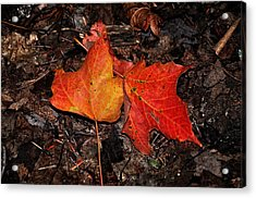 Two Fallen Autumn Leaves Acrylic Print