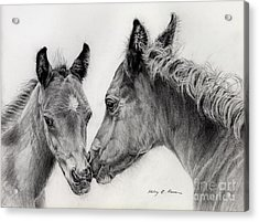 Two Foals Acrylic Print