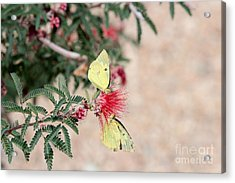 Two For Tea And Nectar Acrylic Print by Crush Creations