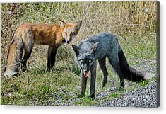 Two Fox Seattle Acrylic Print