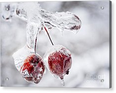 Two Frozen Crab Apples  Acrylic Print by Elena Elisseeva