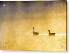 Two Geese Acrylic Print by Tommytechno Sweden