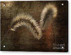Two Grass Flowers Acrylic Print by Heiko Koehrer-Wagner