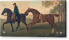 Two Hacks Acrylic Print by George Stubbs