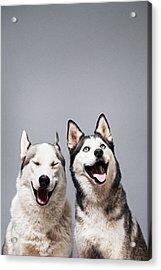 Two Happy Husky Dogs Acrylic Print by Ilka & Franz