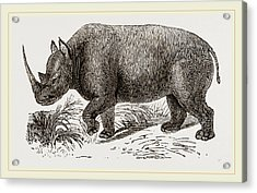Two-horned Rhinoceros Acrylic Print by Litz Collection