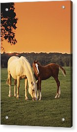 Two Horses And Sunset Acrylic Print