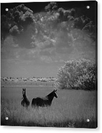Acrylic Print featuring the photograph Two Horses by Bradley R Youngberg