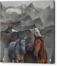 Two Horses Acrylic Print by H??seyin Ta??k??n