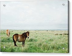 Two Horses In Field Acrylic Print by Suzanne Marshall