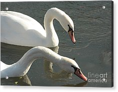 Two In Love Acrylic Print by Becky Neu