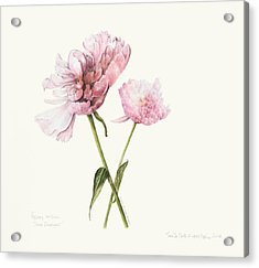 Two In Pink Acrylic Print
