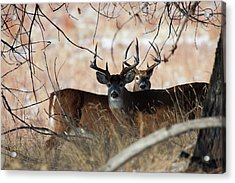 Acrylic Print featuring the photograph Two In The Bush by Jim Garrison