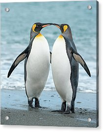 Two King Penguins On A Beach In South Acrylic Print by Elmvilla
