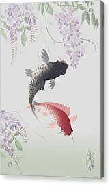 Two Koi And Wisteria Blossoms Acrylic Print